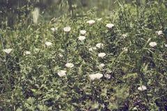 植物在一个公园在夏天 库存照片
