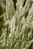 植物在一个公园在夏天 免版税库存照片