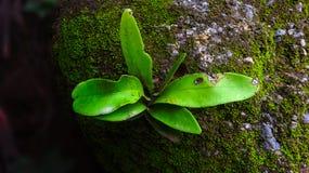 植物在一块湿石头增长 免版税库存照片