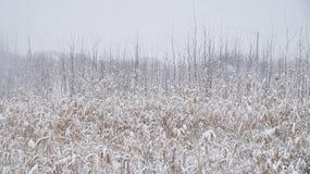 植物在冬天 免版税库存图片