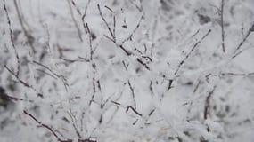 植物在冬天 库存照片