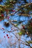 植物在反对天空蔚蓝的森林里 免版税库存图片