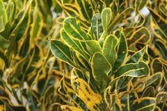 植物在围场,版本6 免版税库存图片