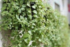 植物在围场,版本11 库存图片