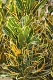植物在围场,版本13 免版税库存照片