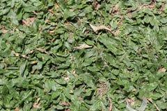 植物在围场,版本14 免版税图库摄影