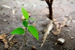 植物在墙壁上增长并且象征奋斗和再开始 库存图片