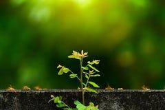 植物在墙壁上增长并且象征奋斗和restar T 库存图片