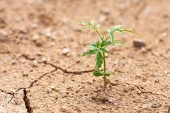 植物在干燥地面上增长 居住的植物尝试下l 免版税库存照片