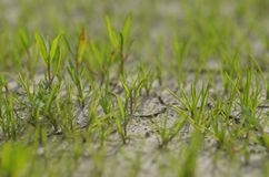 植物在干燥地面上增长 有的植物尝试下生活 库存图片