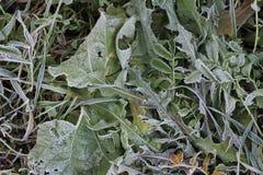 植物在庭院结冰了 免版税库存图片