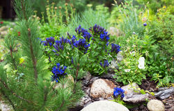 植物在庭院里,在假山庭园 免版税库存照片