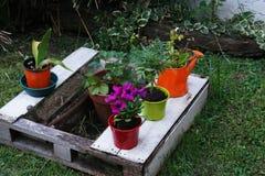 植物在庭院里 库存照片