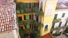 植物在房子窗台和阳台增长  影视素材