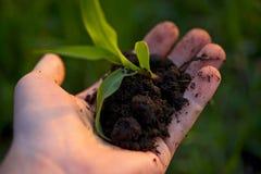 植物在手中 免版税库存图片