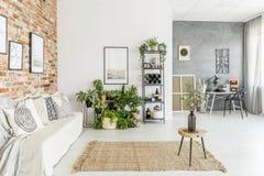 植物在明亮的客厅 库存图片