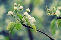植物在春天木头的早晨 免版税库存图片
