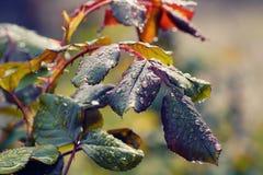 植物在春天木头的早晨 免版税库存照片