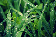 植物在春天木头的早晨 免版税图库摄影
