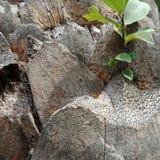植物在树发芽 免版税库存图片