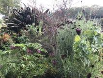 植物在格蒂的庭院里 图库摄影