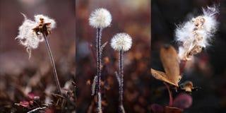 植物在格陵兰 库存照片