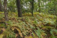植物在森林里 库存照片