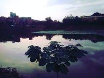 植物在池塘 免版税库存照片