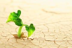 植物在沙漠 免版税库存图片