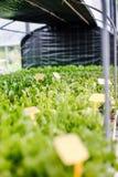 植物在温室里准备好批发对经销商 免版税库存图片