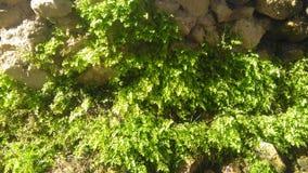 植物在湿气增长 图库摄影