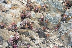 植物在石沙漠 免版税图库摄影