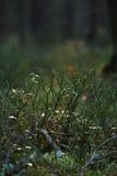 植物在秋天taiga森林里 免版税库存图片