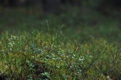 植物在秋天taiga森林里 库存图片