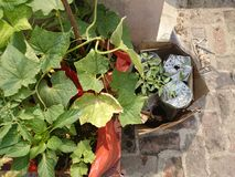 植物在菜园里 库存照片