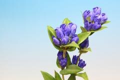 植物在蓝色渐进性背景中 免版税库存图片