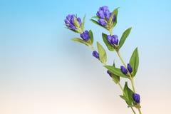 植物在蓝色渐进性背景中 免版税库存照片