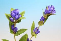 植物在蓝色渐进性背景中 免版税图库摄影