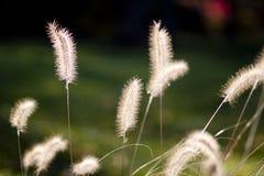 植物在阳光下 免版税库存照片