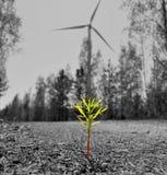 植物在风车背景中 库存照片