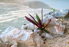 植物在离海地的海岸的附近 免版税图库摄影