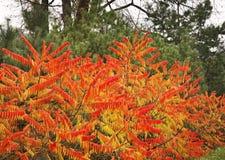 植物在Leluchow附近的森林里 波兰 库存图片