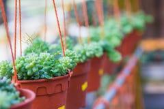 植物垂悬 库存图片