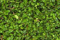 植物墙壁背景 免版税图库摄影