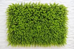 植物墙壁 库存图片
