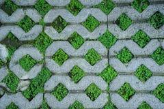 植物墙纸 图库摄影