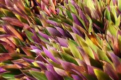 植物墙纸 免版税库存图片