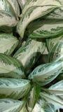植物增加颜色 库存照片