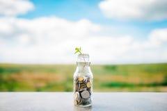 植物增长在硬币外面 免版税库存照片