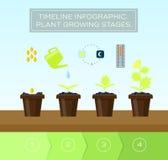 植物增长的集合和infographic与象头,温度计,轻的政权 库存图片